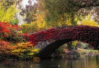 Gapstow Bridge in Autumn