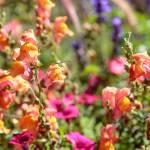 """Assorted flowers"" by SueLeonard"