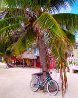 Bicycle and Palm