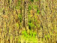 Forest_and_marsh