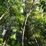 """Overhanging Greenery"" by aubreyfrimoth"