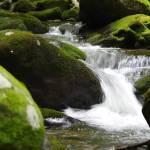 """creek"" by erinlanzendorfer"