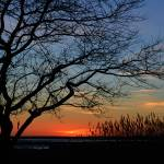 """Sunset Tree Ocean City MD"" by travel"
