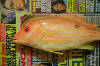 Red Snapper with News