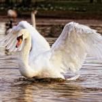 """""""Feathered Elegance"""" by ImageMonkey"""