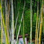 """Yellow Bamboo"" by judithschmidt"