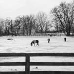 """Horses in the Snow"" by WildAboutNaturePhotography"