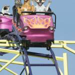 """Cats-Dogs-Riding-Rollercoaster"" by johnlund"