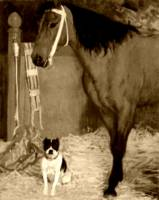 Horse and dog at the stables 4
