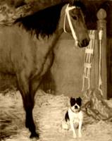 Horse and dog at the stables 3