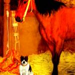"""Horse and dog at the stables 2"" by bandtdigitaldesigns"