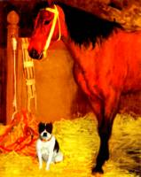 Horse and dog at the stables 2
