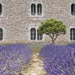 """""""Provence"""" by Jo-PinX"""