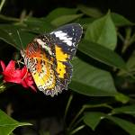 """butterfly garden inside train garden"" by fotoshoot"