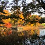 """""""Framed Pier at Turtle Pond"""" by MaryLorArt"""