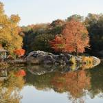"""""""Glorious Fall, Central Park"""" by MaryLorArt"""
