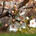 """""""Warm Spring Canvas"""" by Groecar"""