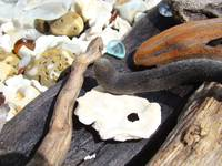 Beach Driftwood Art Blue Seaglass Shells Coastal