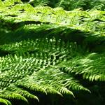 """Green Forest Fern Branches Leaves Art Prints Ferns"" by BasleeTroutman"