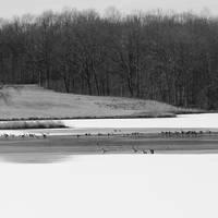 Ni River Reservoir Winter Birds Art Prints & Posters by John Ayo
