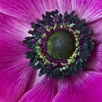 deep pink by julie scholz