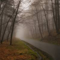 """Foggy Lane"" by Jacqueline Evans"