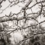 """""""Frozen"""" by WildAboutNaturePhotography"""