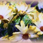 """""""Marigolds"""" by carol29hynes"""