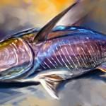 """Yellowfin Tuna Sportfishing Art - ""Where"