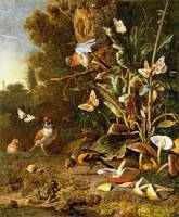 Melchior d'Hondecoeter - Birds, Butterflies and a