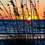 """""""Sea Oats Silhouette"""" by Lorraine_Sommer"""
