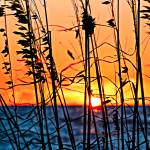 """Sea Oat Sunset"" by Lorraine_Sommer"