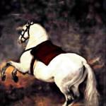 """A White Horse"" by bandtdigitaldesigns"