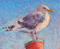 seagull_highres