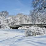 """Bow Bridge in Snow"" by MaryLorArt"