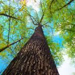 """Climb the highst Tree"" by hannahsview"