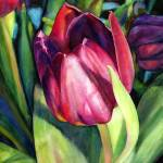 """Tulip Delight"" by HaileyWatermedia"