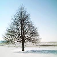 A Perfect Winter Tree Art Prints & Posters by Christopher Johnson