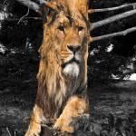 """Liontree"" by amira"