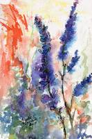 California Wild Blue Lupines Watercolor