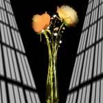 """""""Roses in Still Life"""" by frankreggio"""