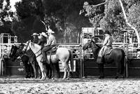 Wagin Woolorama Rodeo