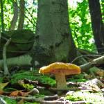 """Orange Mushroom 2"" by RenfrewArt"