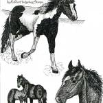 """3 horses (c)Lauren Curtis"" by LaurenCurtis"