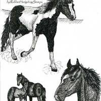 3 horses (c)Lauren Curtis Art Prints & Posters by Lauren Curtis