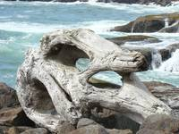 Driftwood Decorative Ocean Blue Waves Coastal art