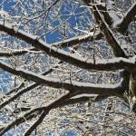 """""""winter wonder"""" by JulieScholz"""