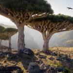 """Dragon-Blood-Trees-Socotra"" by johnlund"