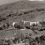 """scl_los_altos_vineyard_bld_SEP-p"" by worldwidearchive"