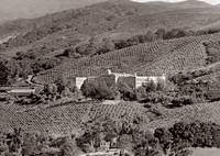 scl_los_altos_vineyard_bld_SEP-p by WorldWide Archive